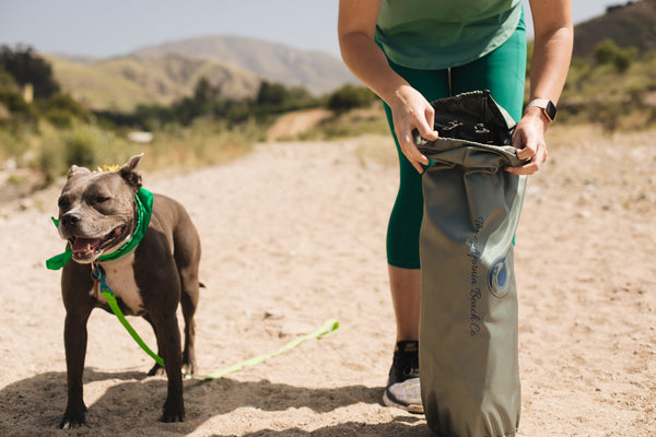 The Camping Essentials for Your Pet: Five Must-Haves