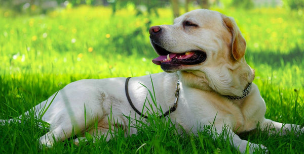 The Best Ways to Protect Your Pet from the Sun