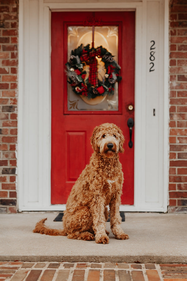 Make These Holiday Treats for Your Dog