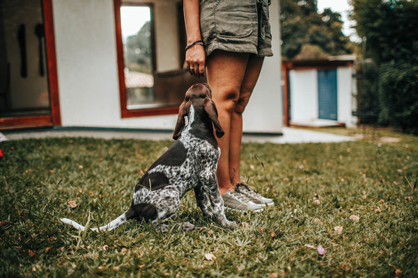 Three Easy Commands Your Pet is Sure to Listen to and Do