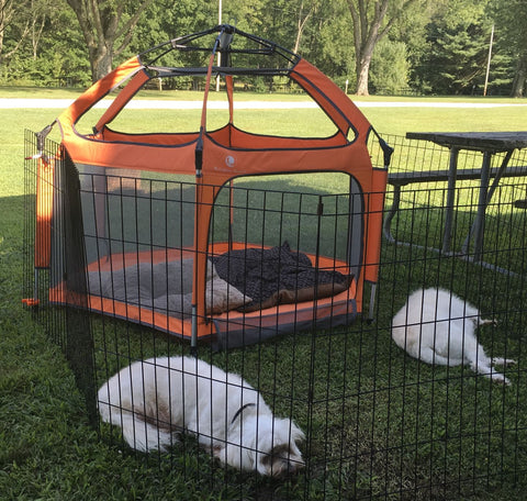 Two dogs relaxing outside their pop n go playpen