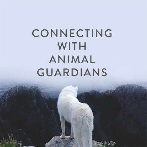 Thursday, May 9th -- Connecting with Animal Guardians