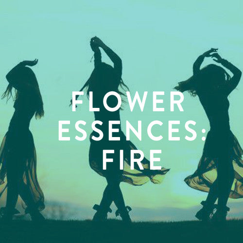 Sunday, August 17th -- Fire Spirit Medicine:  Flower Essences for the Fire Element