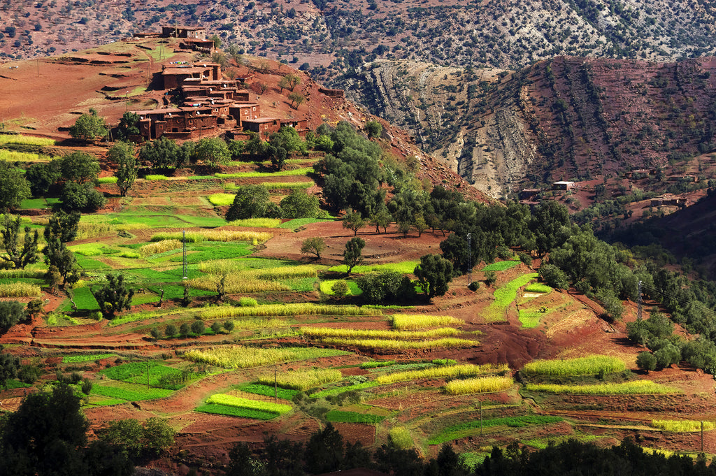 Beautiful view of a village in Morocco with argan trees and greenery
