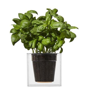 Boskke Cube Clear Veversed Planter Triple-Pack Offer - 2tech ltd