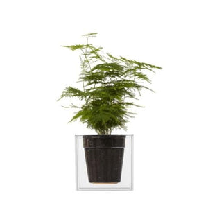 Boskke Cube Transparent Planter