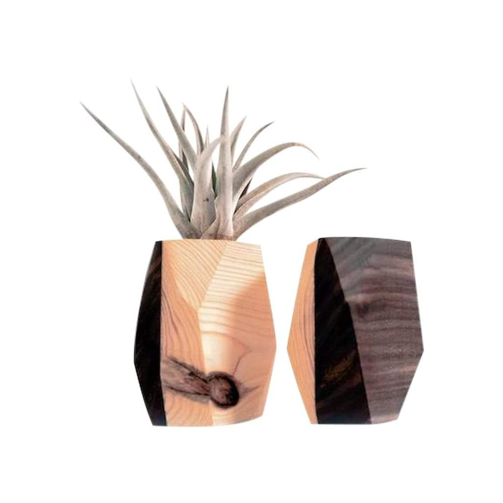 Botanicool Planters, Pots + Vases Finished Walnut and Pine Walnut + Pine Geo Planter