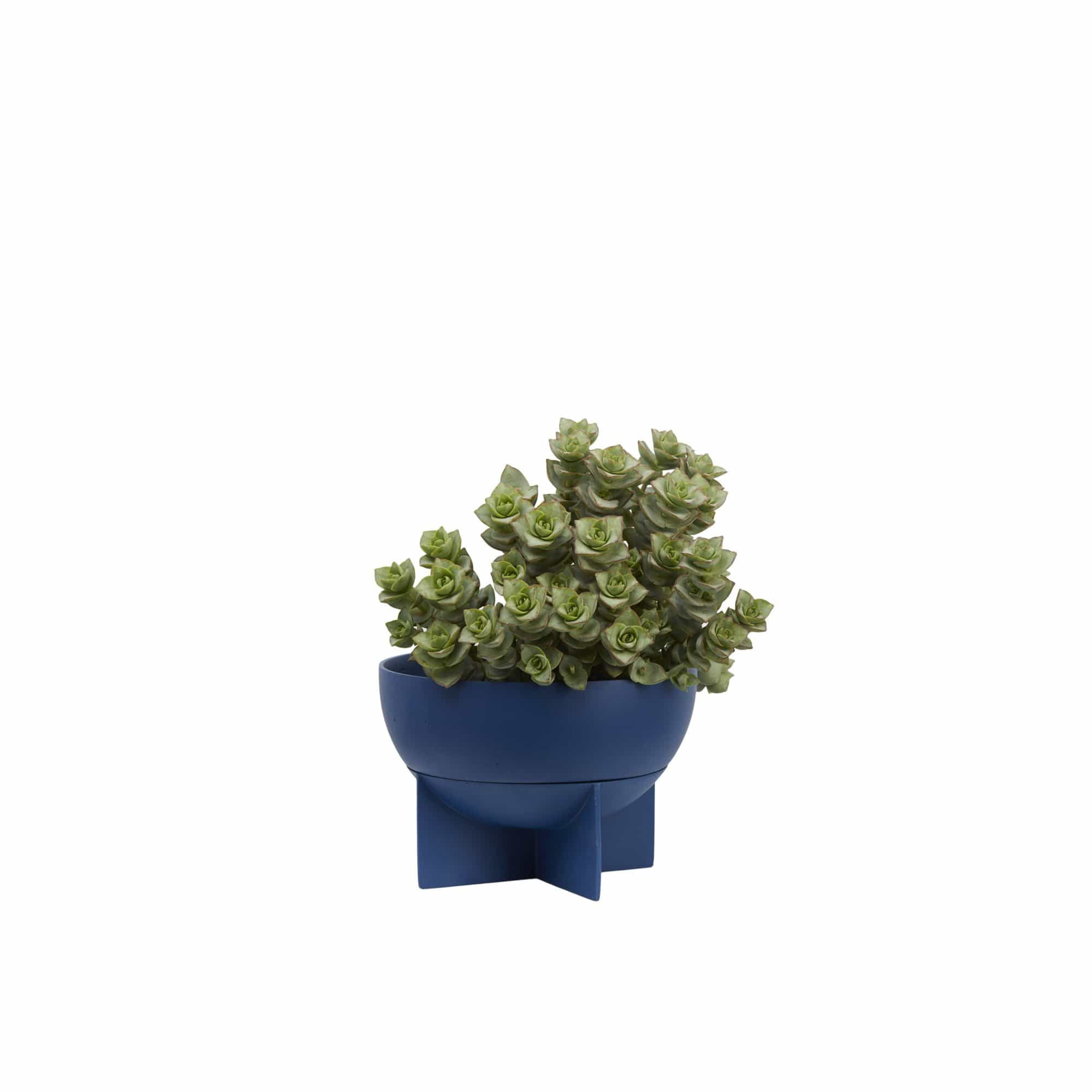 Dome Eros Planter