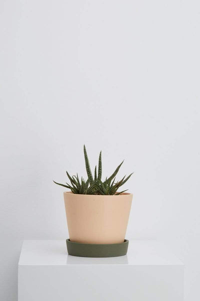 Capra Designs Planters, Pots + Vases Salt/Agave Small Louise Planter