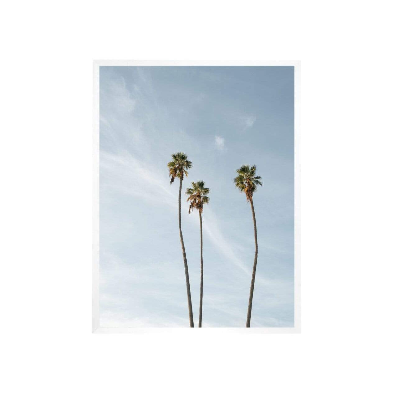 Carley Rudd Photography + Prints 3 Palms Print