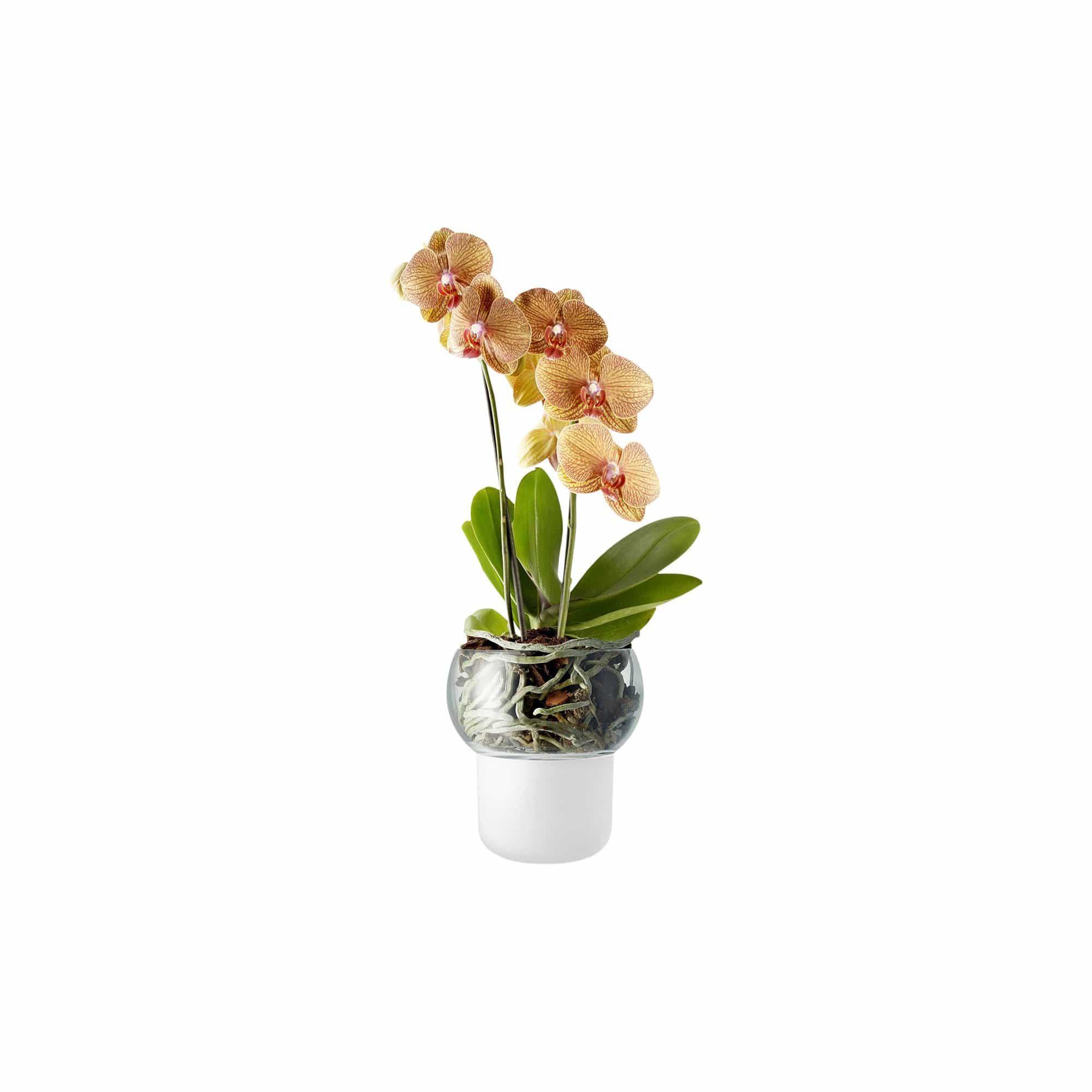 Self-Watering Orchid Pot With Clear Top