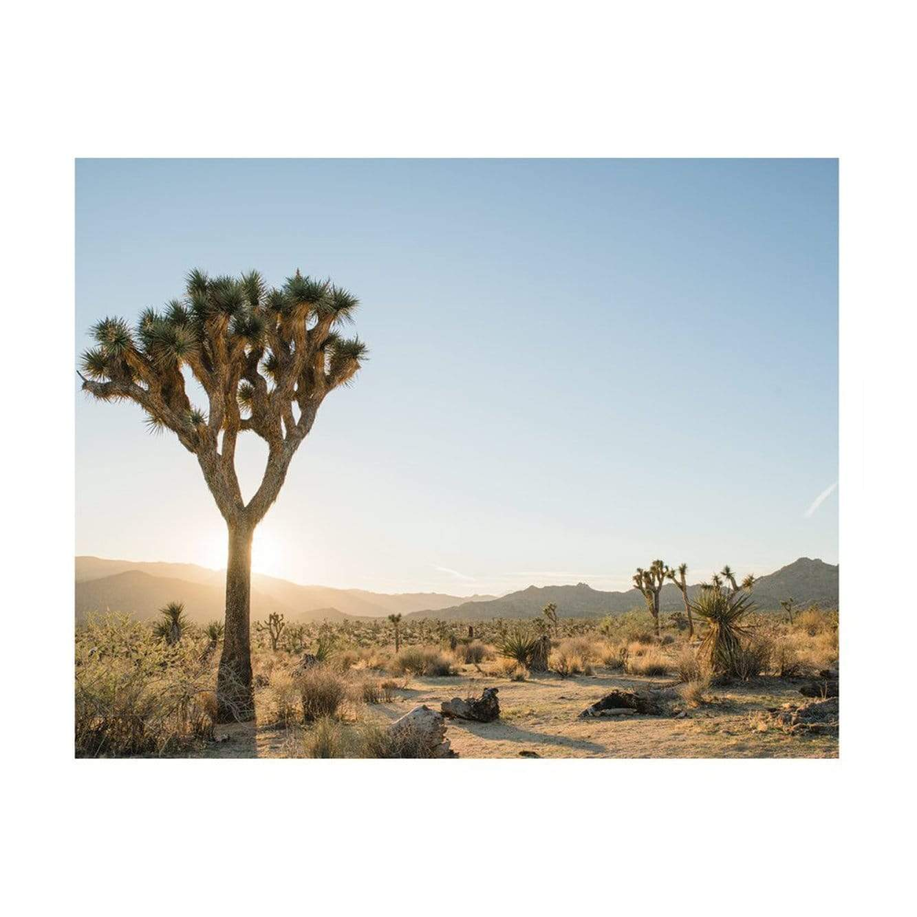 Jennifer Chong Photography + Prints Joshua Tree 03 Print