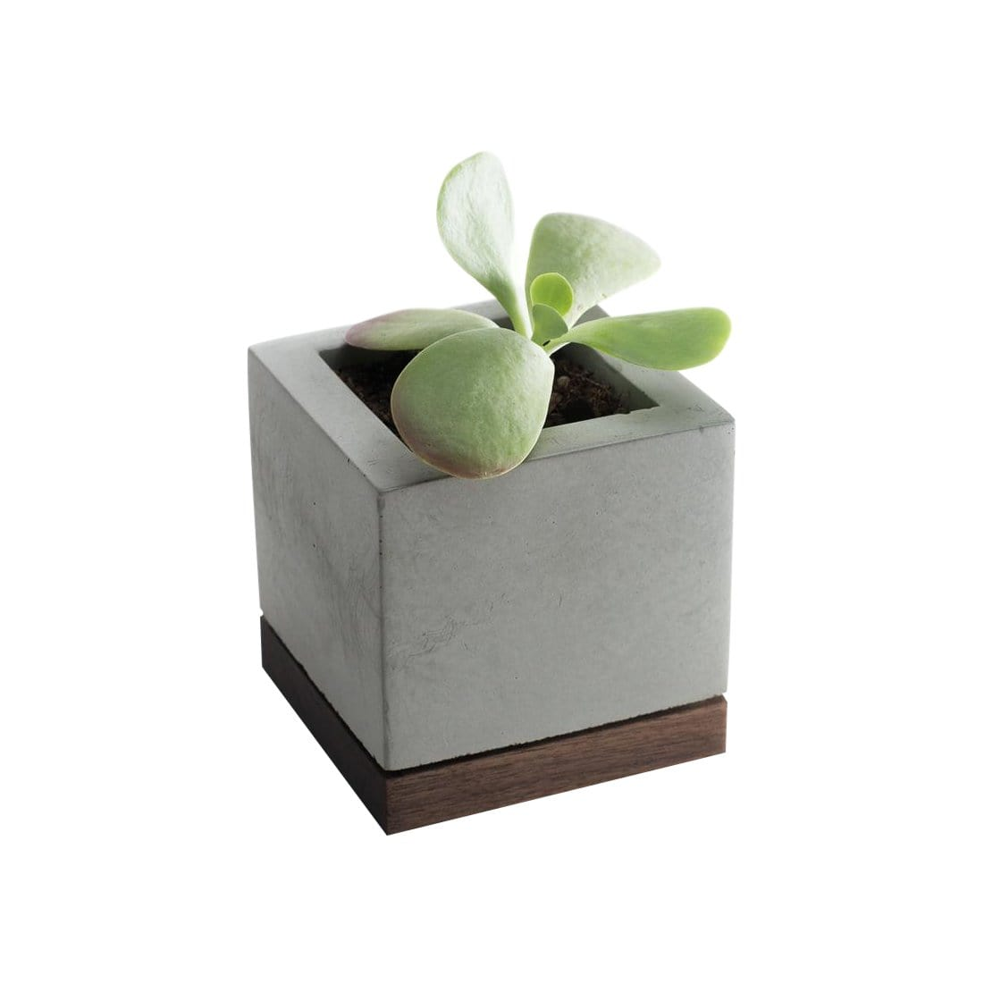 Concrete + Wood Planter