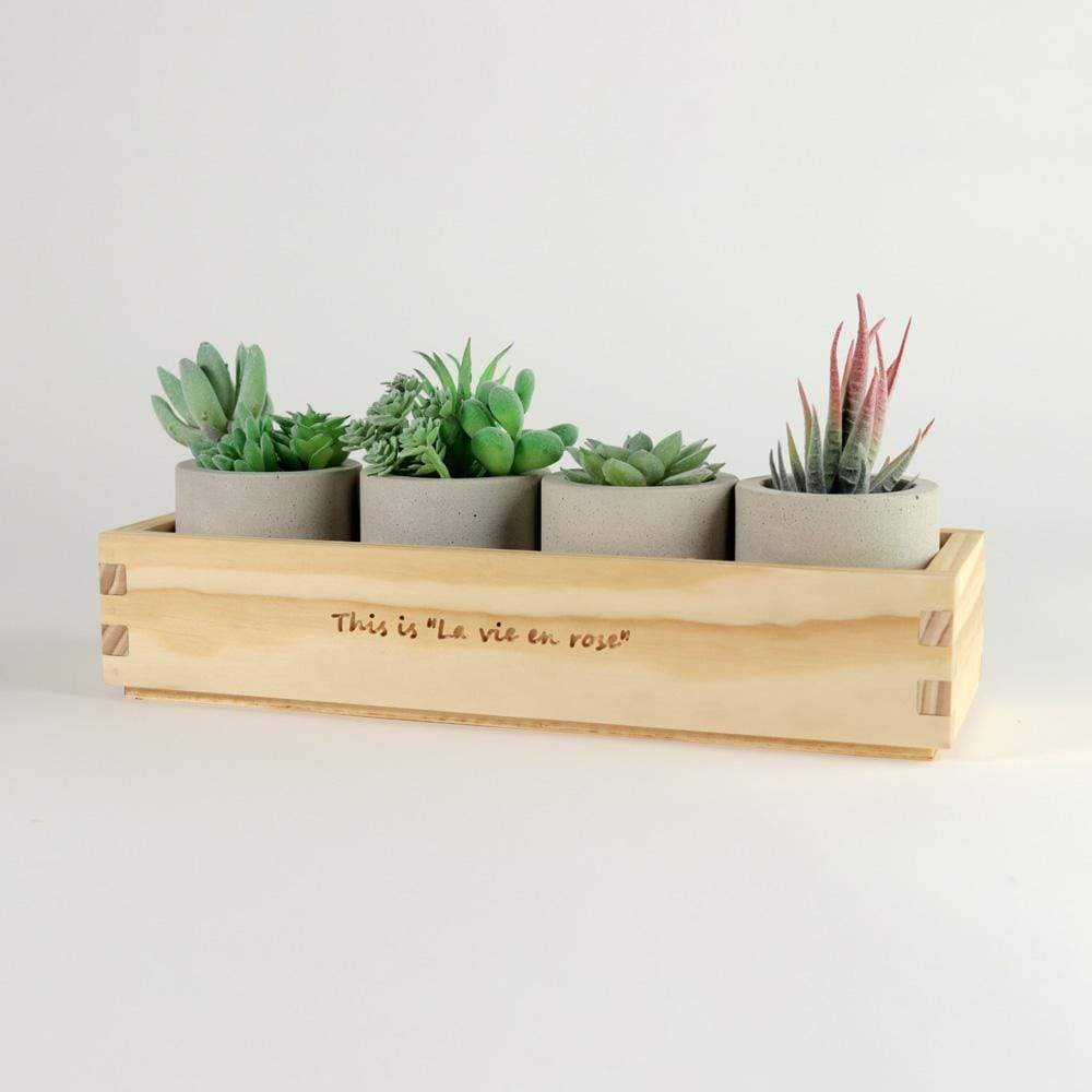 Box Planter With Cement Pots