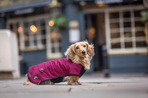 Dachshund Underbelly Coat. Black or Burgundy.