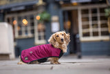 Dachshund Underbelly coat