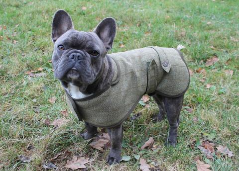 Tweed French Bulldog Coat