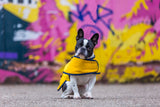 YELLOW WAXED COTTON FRENCH BULLDOG COAT