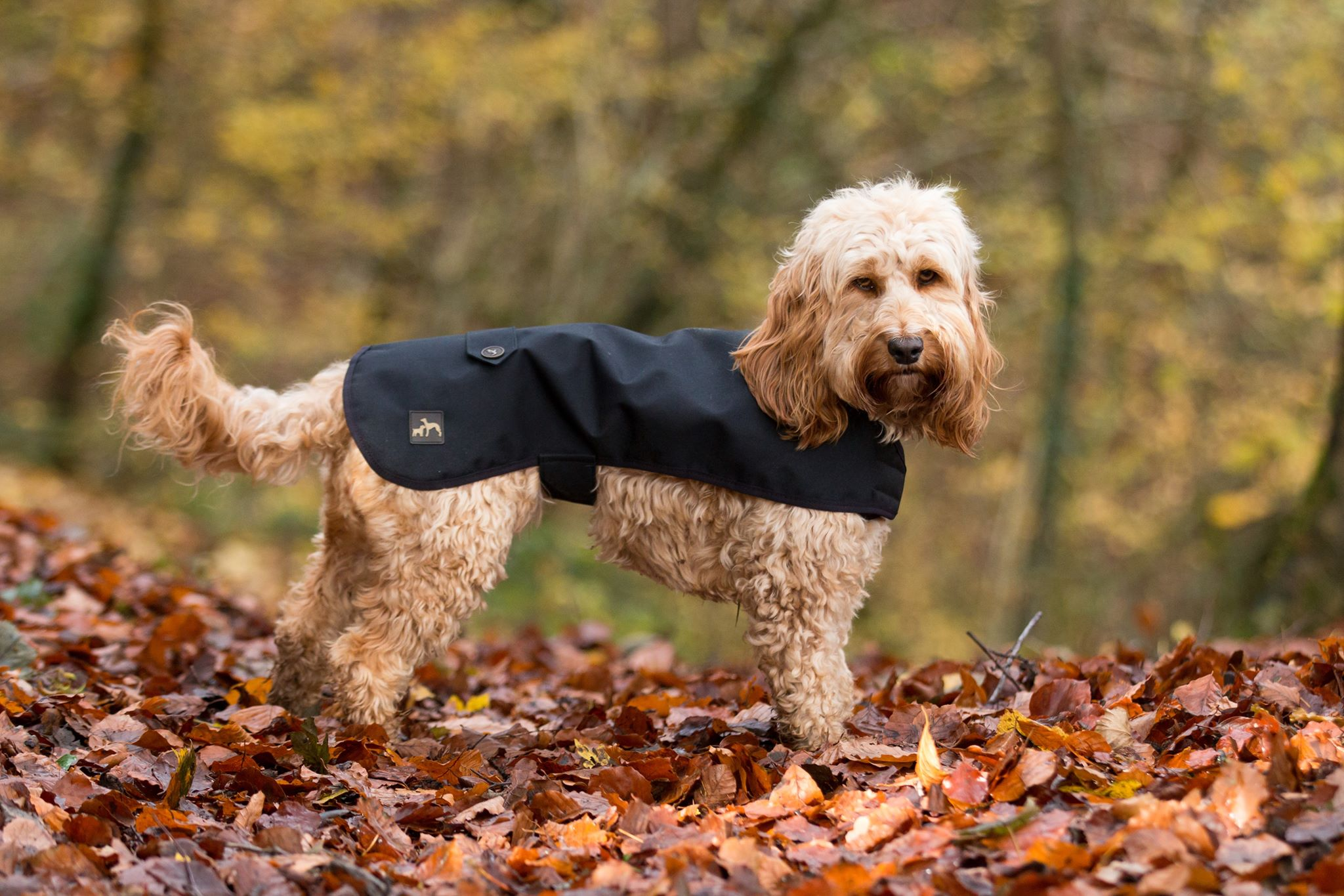 Black Dog Coat