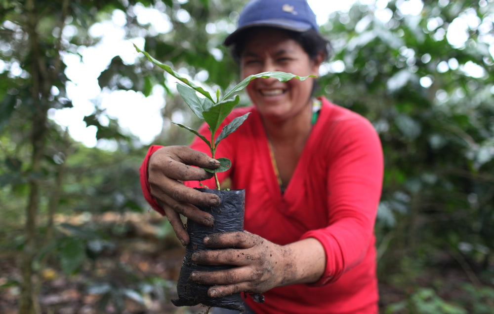 Coffee grower holding a young coffee plant