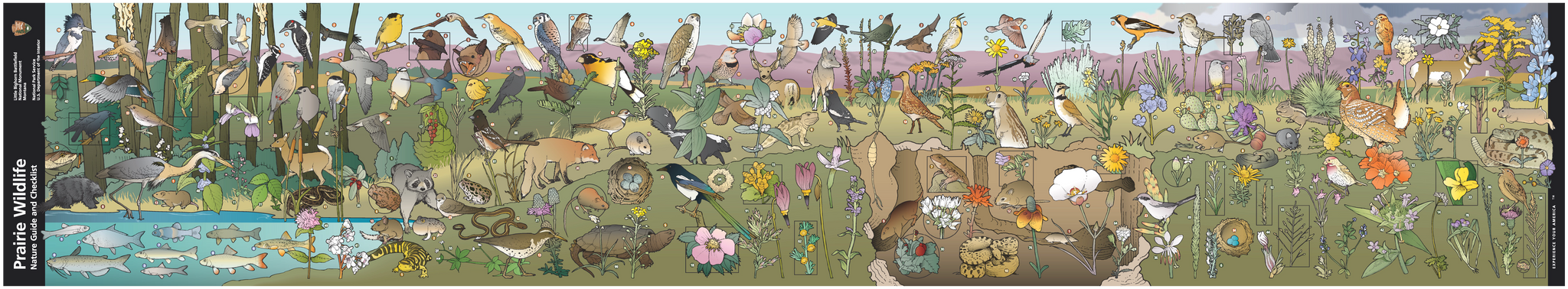 Full brochure artwork of Little Big Horn Prairie Nature Guide