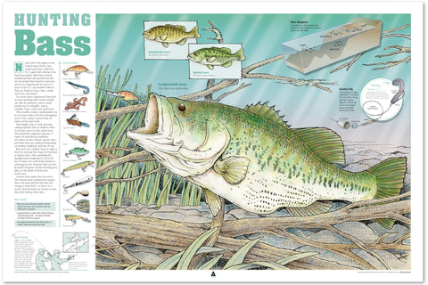 Hunting Bass Infographic Print (36 x 24)