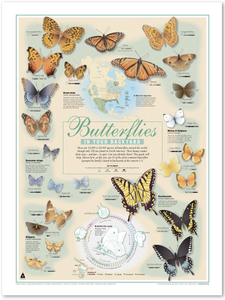 Butterflies in Your Backyard Print (18x24)