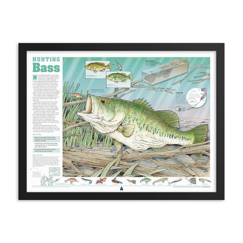 Hunting Bass Infographic Print (24 x 18) Framed