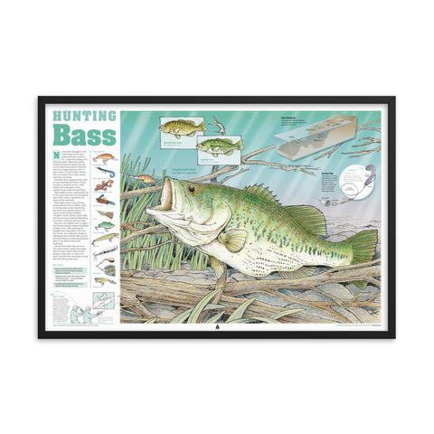 Hunting Bass Infographic Print (36 x 24) Framed