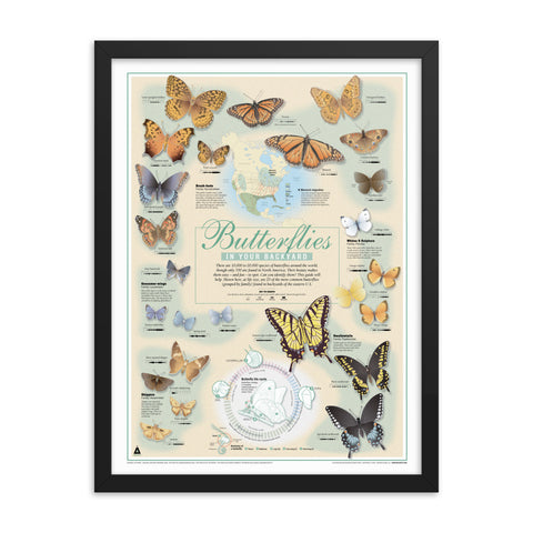 Butterflies In Your Backyard (18x24) Framed