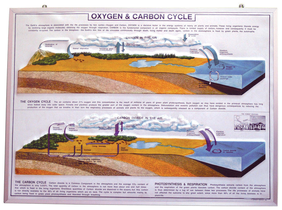Model Oxygen & Carbon Cycle in Nature, size 75x100cm.