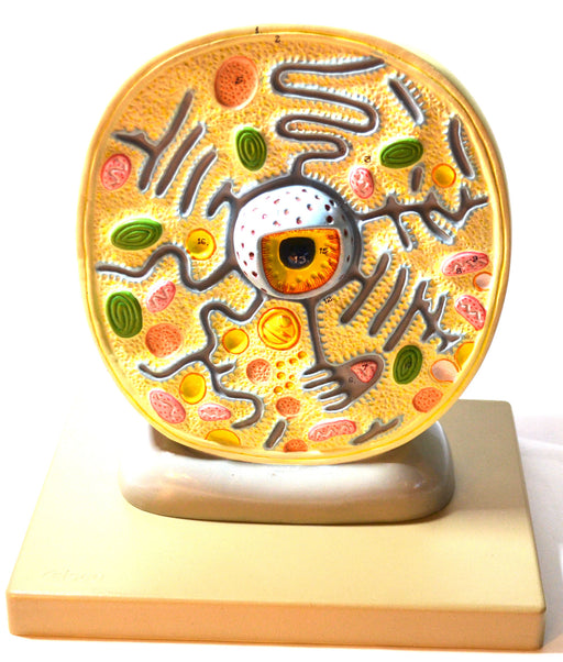 "Eisco Labs Plant Cell Model; Attached to Base; Cell Diameter 8""; Cell Height 10""; Electron Microscope Structure"