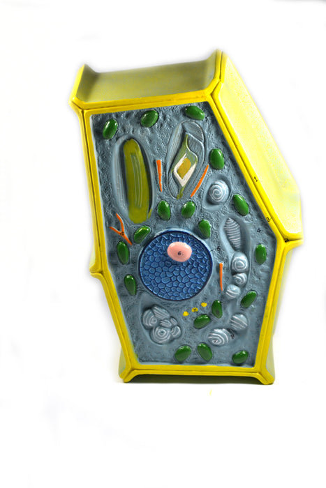 Eisco Labs Plant Cell Model Free Standing 50 Million Times Enlarged