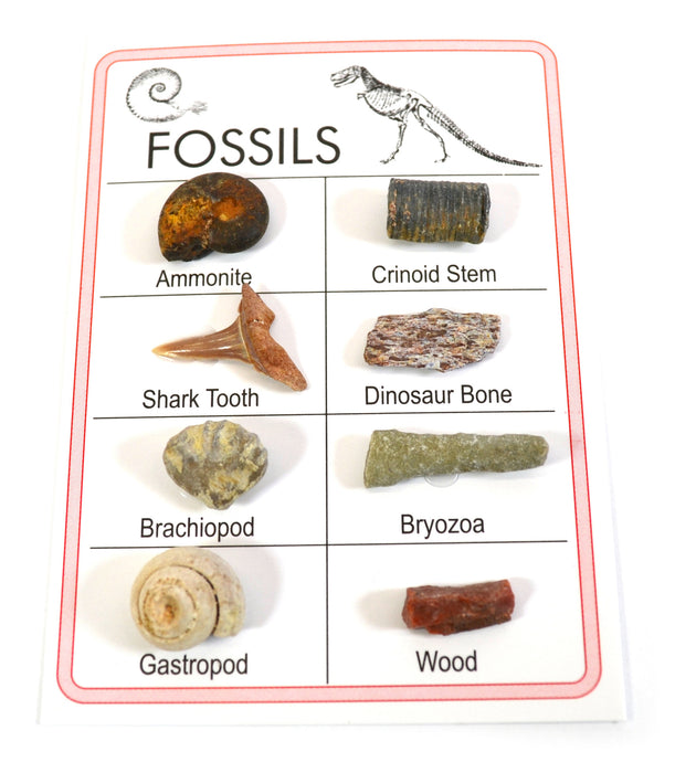 Pocket Reference Fossil Card with 8 Identified Specimens, 1cm Each