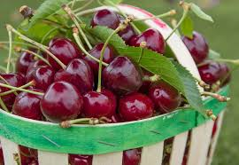 Cherries Are The Pick Of The Season