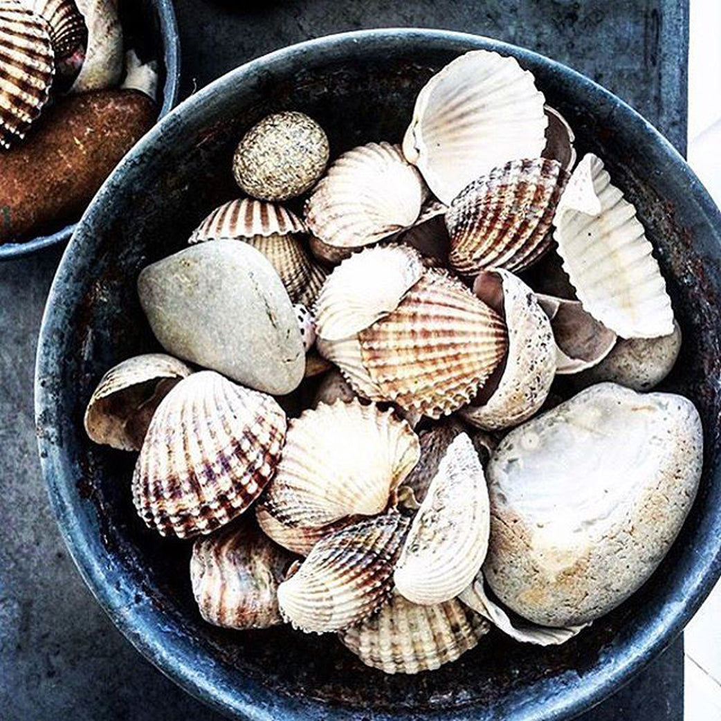 Bowl full of seashells