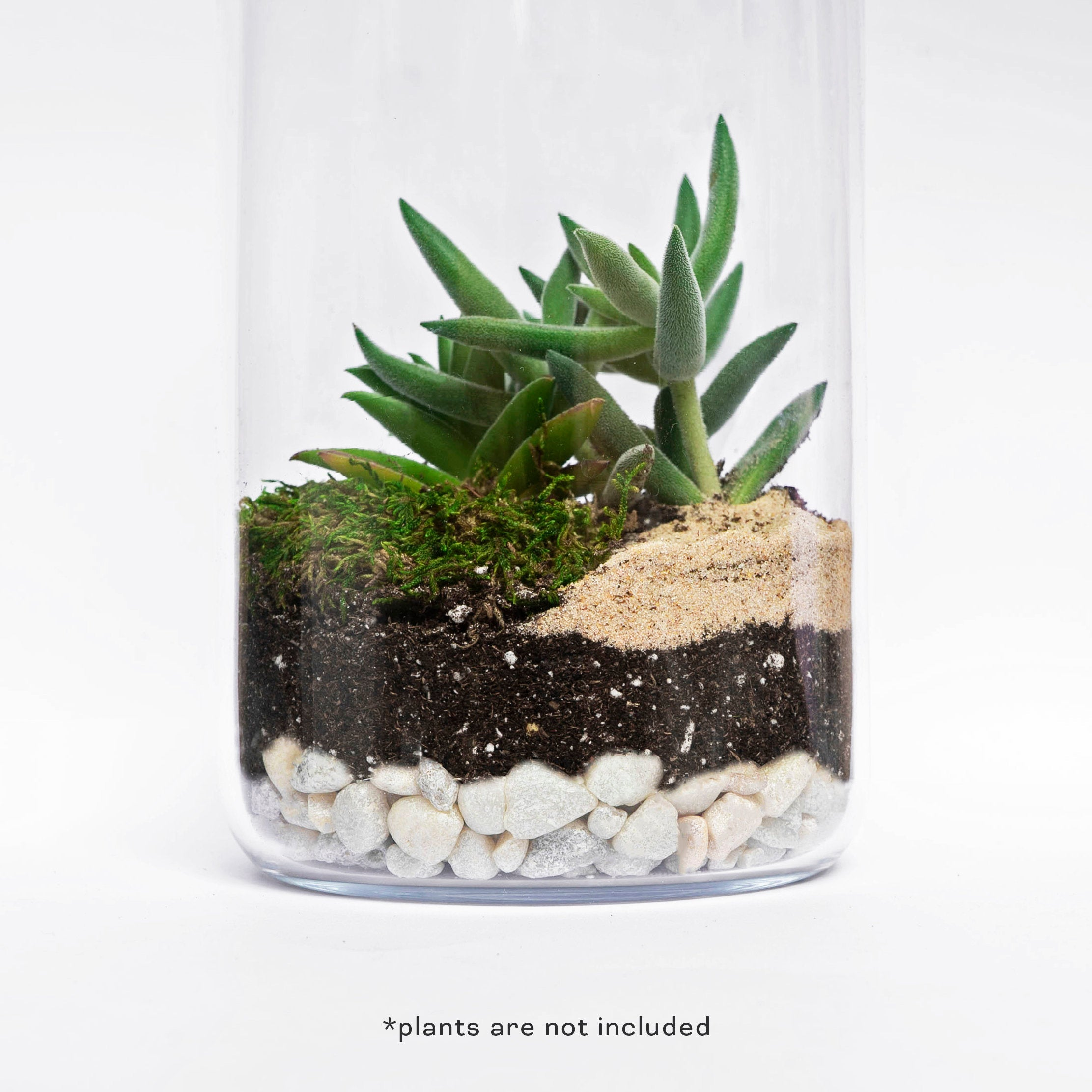 MOCTUS DIY Forest Terrarium Kit includes Beige Sand, Pearl Stones, Soil and Moss