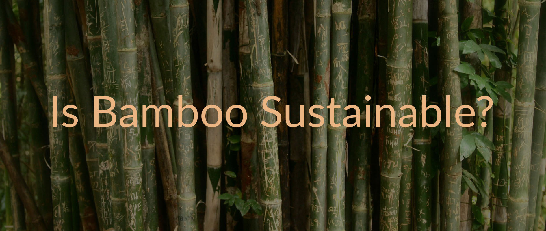 Is Bamboo Sustainable?