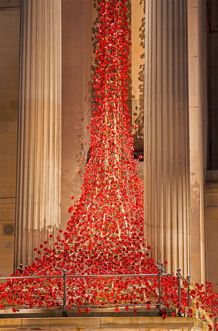 Poppies at St Georges Hall - Columns