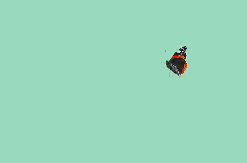 Red Admiral II