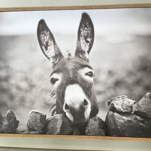Framed Donkey Art