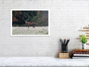 The Imperial Red Deer Stag