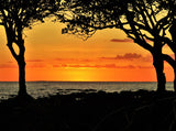 Weipa Tropical Orange Sunset And Mangrove Tree Silhouettes