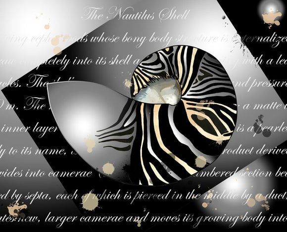 Seashells Fancy Zebra Patterned Nautilus