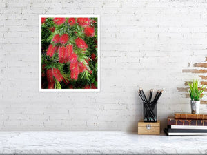 Australian Red Bottle Brush