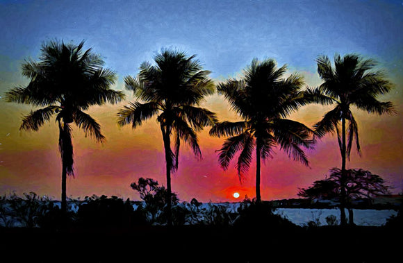 Sunset Coconut Palm Silhouettes Weipa