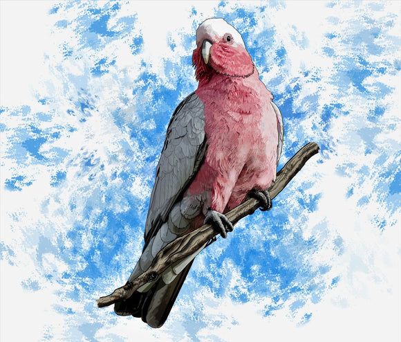 G is For Galah