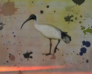 Bird Illustration Ibis