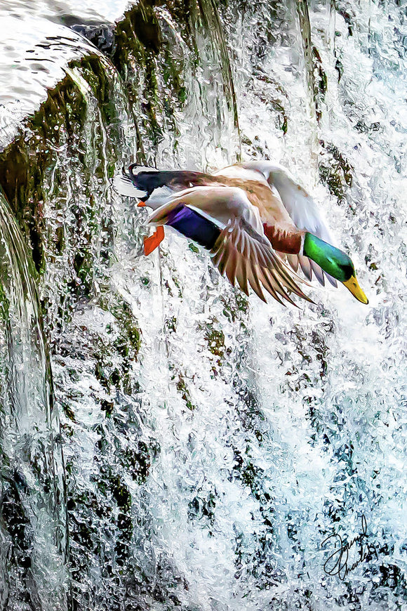 Marsden Duck Leap 2