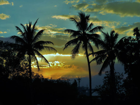 Weipa Sunset Tropical Coconut Palms Silhouettes At Sun Down